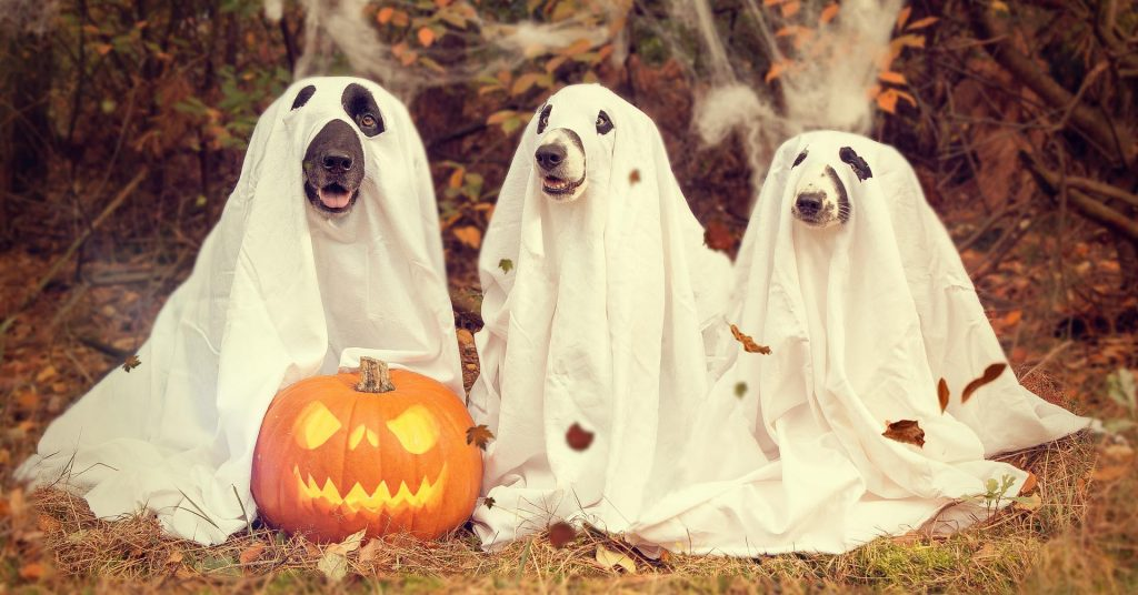 Knoxville Halloween Events - Pet-Friendly