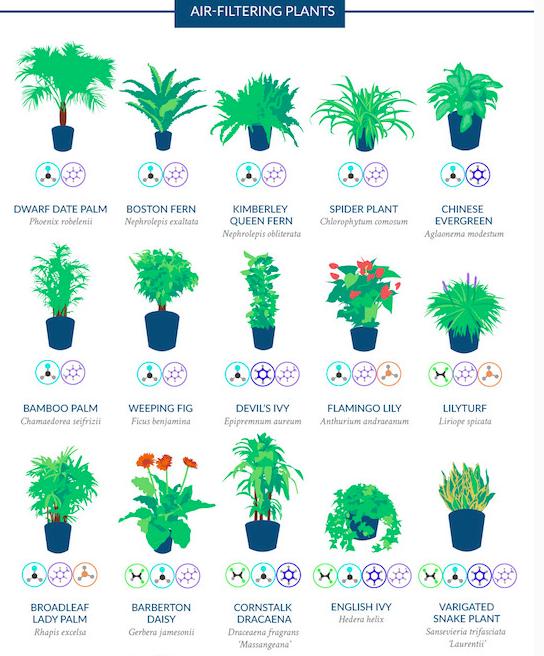 Ashley Olsberg Living Room Set - Plants