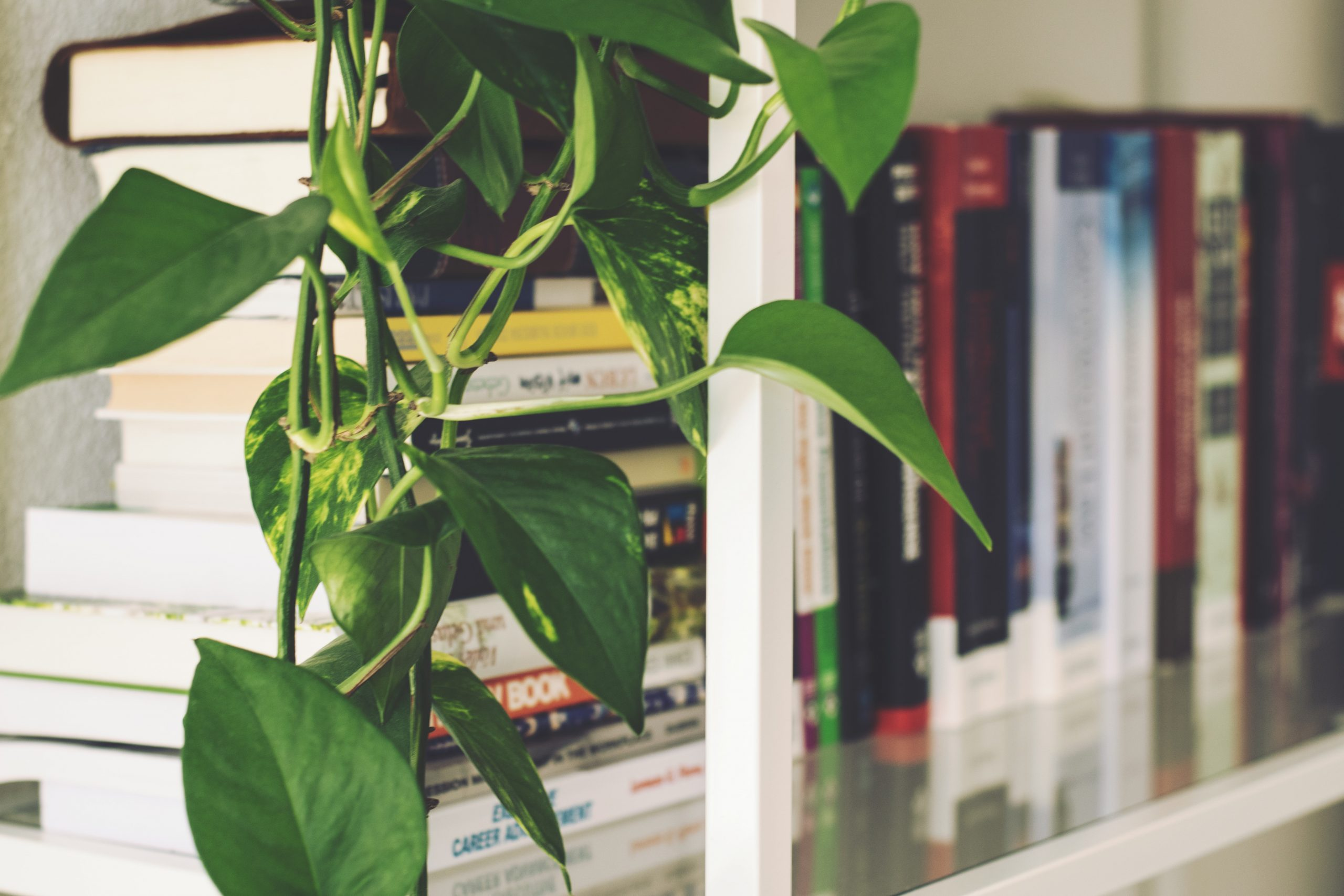 Home Office - Plant on Shelf