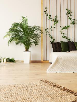 Spring Into Better Sleep: Spotlight on the Sleep Store | Sofas & More - Greenery